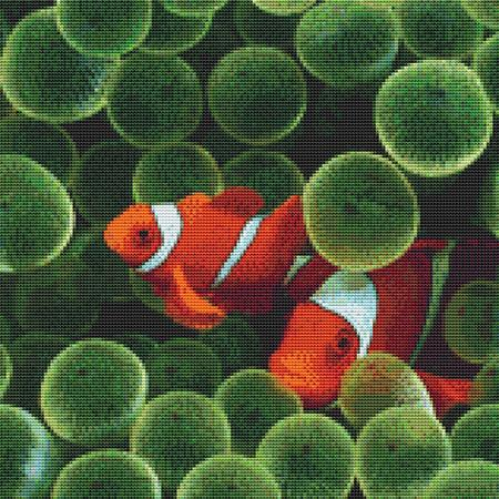 click here to view larger image of Clownfish (chart)