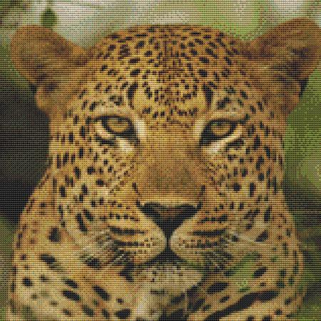 click here to view larger image of Angry Leopard (chart)