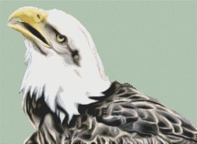click here to view larger image of Bald Eagle 3 (chart)