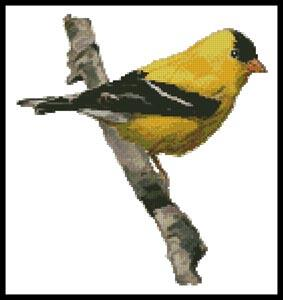 click here to view larger image of American Gold Finch  (Claire Harkness) (chart)