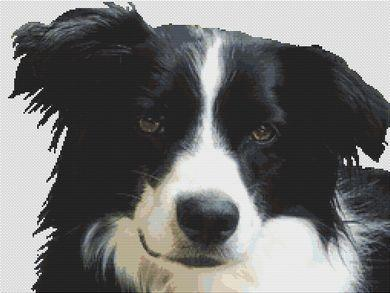 click here to view larger image of Border Collie (chart (special))