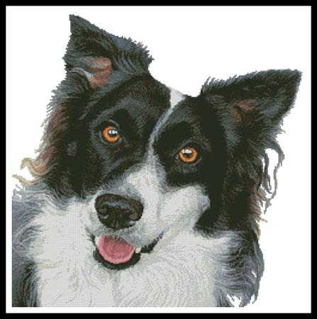 click here to view larger image of Border Collie Painting (chart)