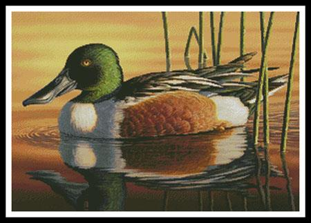 click here to view larger image of Northern Shoveler (chart)