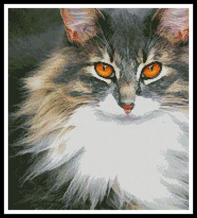Kitty - click here for more details about chart