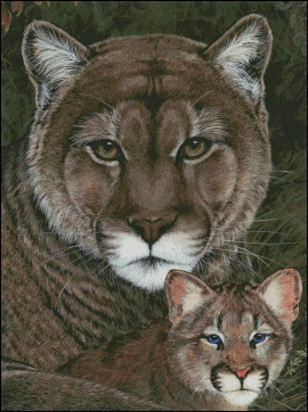 click here to view larger image of Cougar Family Portrait (chart)