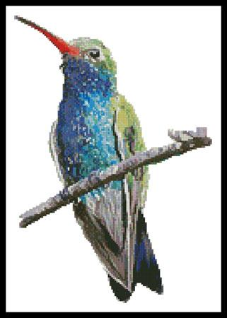 click here to view larger image of Broad-Billed Hummingbird (chart)