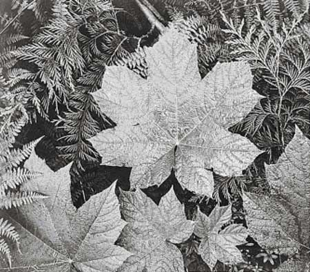 click here to view larger image of In Glacier National Park (Leaves) (chart)