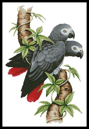click here to view larger image of African Grey Parrots  (Howard Robinson) (chart)