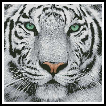click here to view larger image of White Tiger Close Up (None Selected)