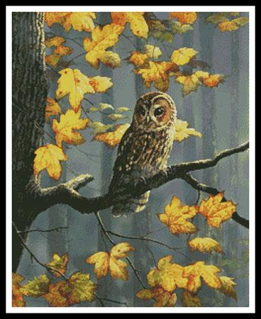 click here to view larger image of Tawny Owl (chart)