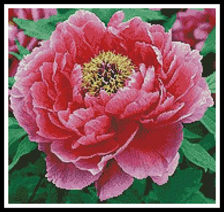 click here to view larger image of Peony (Crop) (chart)