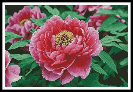 click here to view larger image of Peony (chart)