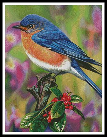 click here to view larger image of Hollyberry Bluebird (chart)