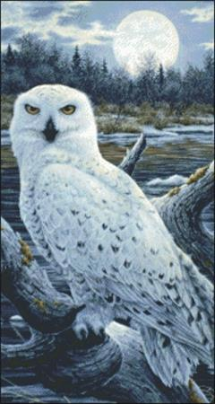 click here to view larger image of Snippet Snowy Owls (chart)