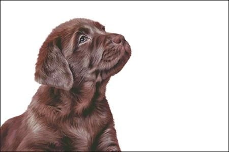 click here to view larger image of Chocolate Lab Puppy (chart)