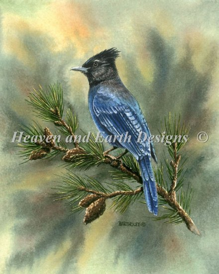 click here to view larger image of Mini Stellar Jay (chart)
