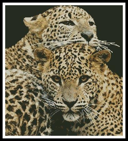 click here to view larger image of Leopards (chart)