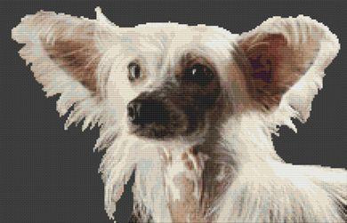 click here to view larger image of Chinese Crested (chart)