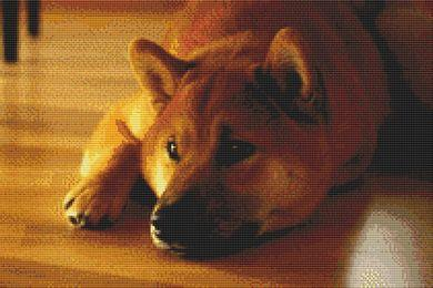 click here to view larger image of Shiba Inu - Peaceful (chart)