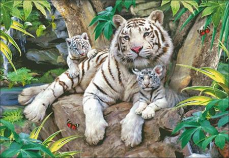 click here to view larger image of White Tigers Of Bengal (chart)