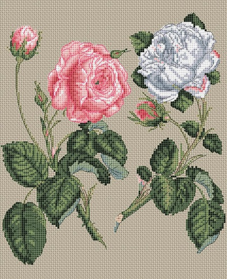 click here to view larger image of Pink Centifolia Rose & White Rose (counted cross stitch kit)