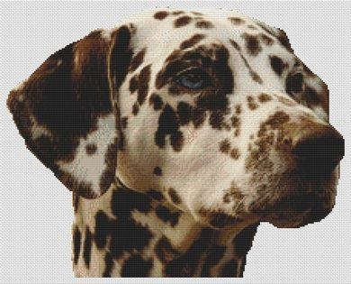 click here to view larger image of Liver Dalmation (chart)