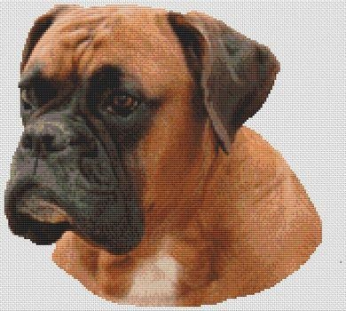 click here to view larger image of Boxer - Sally (chart)