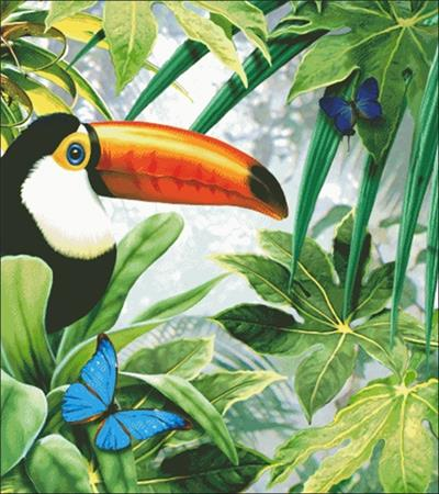click here to view larger image of Toco Toucan (chart)