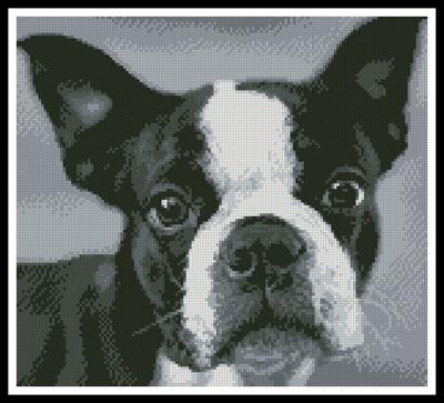 click here to view larger image of Boston Terrier Close Up (chart)