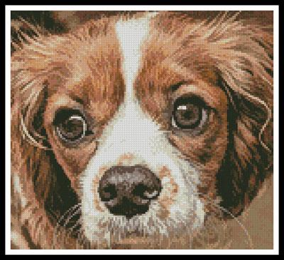 click here to view larger image of Cavalier King Charles (chart)