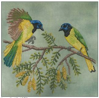 click here to view larger image of Green Jays (chart)