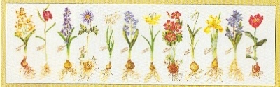 click here to view larger image of Flowers and All (Aida) (counted cross stitch kit)
