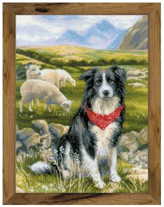 click here to view larger image of Border Collie (hand painted canvas)