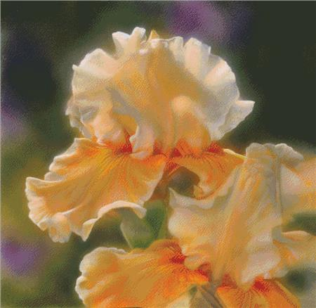 click here to view larger image of Peaches And Creme Iris (chart)
