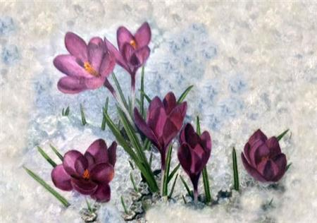 click here to view larger image of Winter Crocuses (chart)