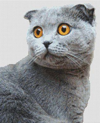 click here to view larger image of Grey Scottish Fold (chart)