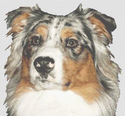 click here to view larger image of Australian Shepherd  (chart)