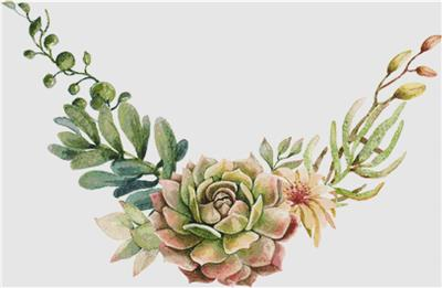 click here to view larger image of Arrangement Of Succulents II (chart)