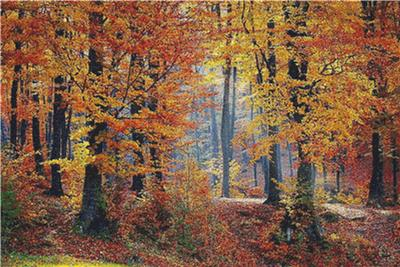click here to view larger image of Forest Landscape in Autumn (chart)
