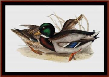 click here to view larger image of Common Wild Duck (chart)