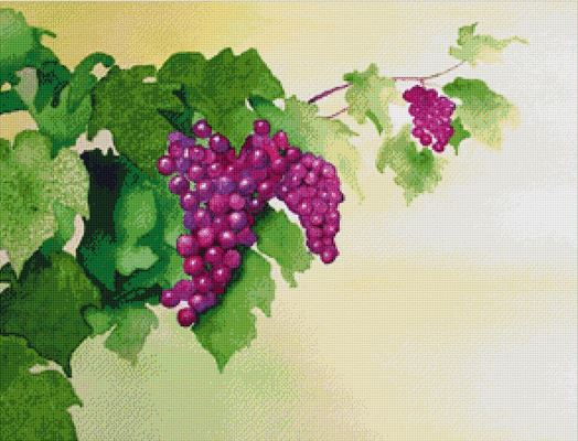click here to view larger image of Grape Vine (chart)