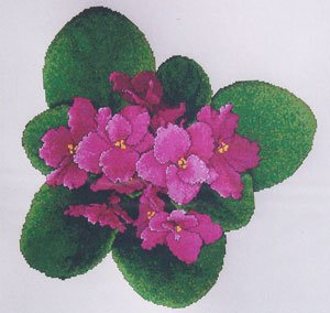click here to view larger image of African Violets 3 - UNIQ (chart)