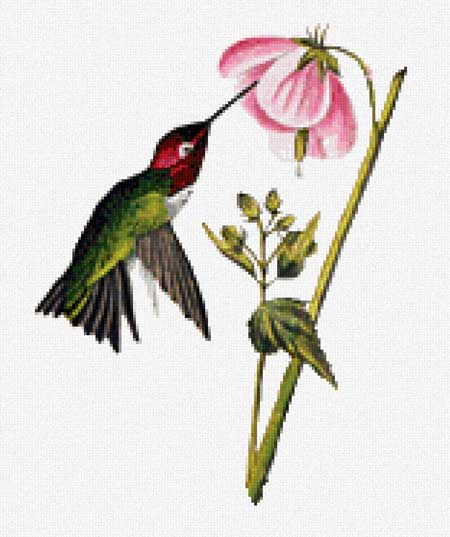 click here to view larger image of Columbian Hummingbird (detail) (chart)