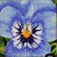 click here to view larger image of Pansy (counted cross stitch kit)