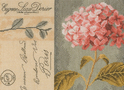 click here to view larger image of Hydrangea - 27ct (counted cross stitch kit)