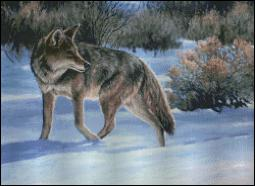 click here to view larger image of Checking His Backtrail - Coyote (chart)