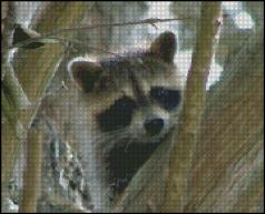 click here to view larger image of Raccoon Stuck in a Tree  (chart)