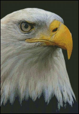 click here to view larger image of Bald Eagle Portrait (chart)