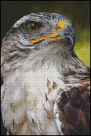 click here to view larger image of Portrait of a Hawk (chart)