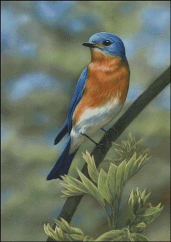 click here to view larger image of Eastern Bluebird (chart)